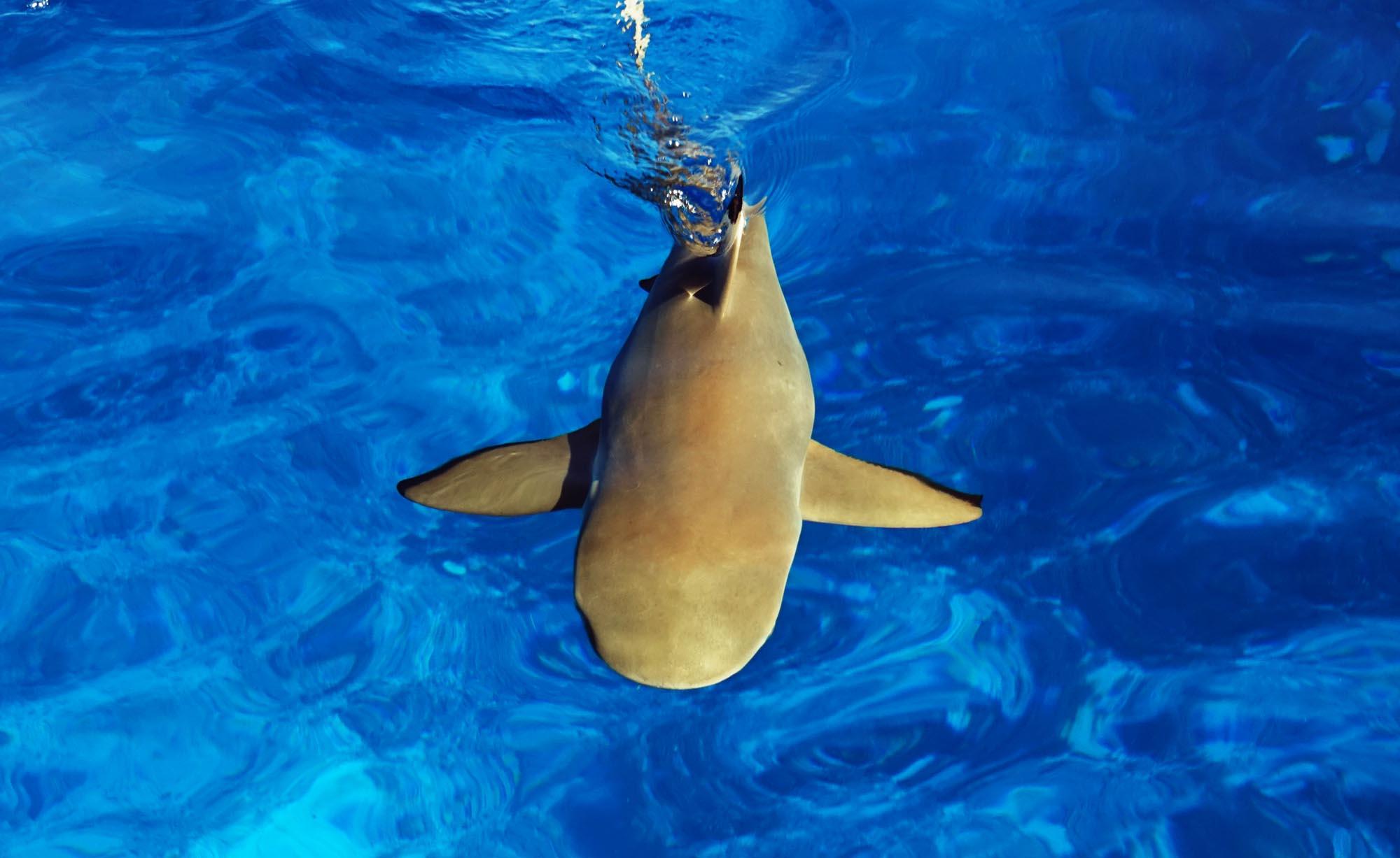 Blacktip sharks Moorea Ocean Adventures Marine wildlife tours