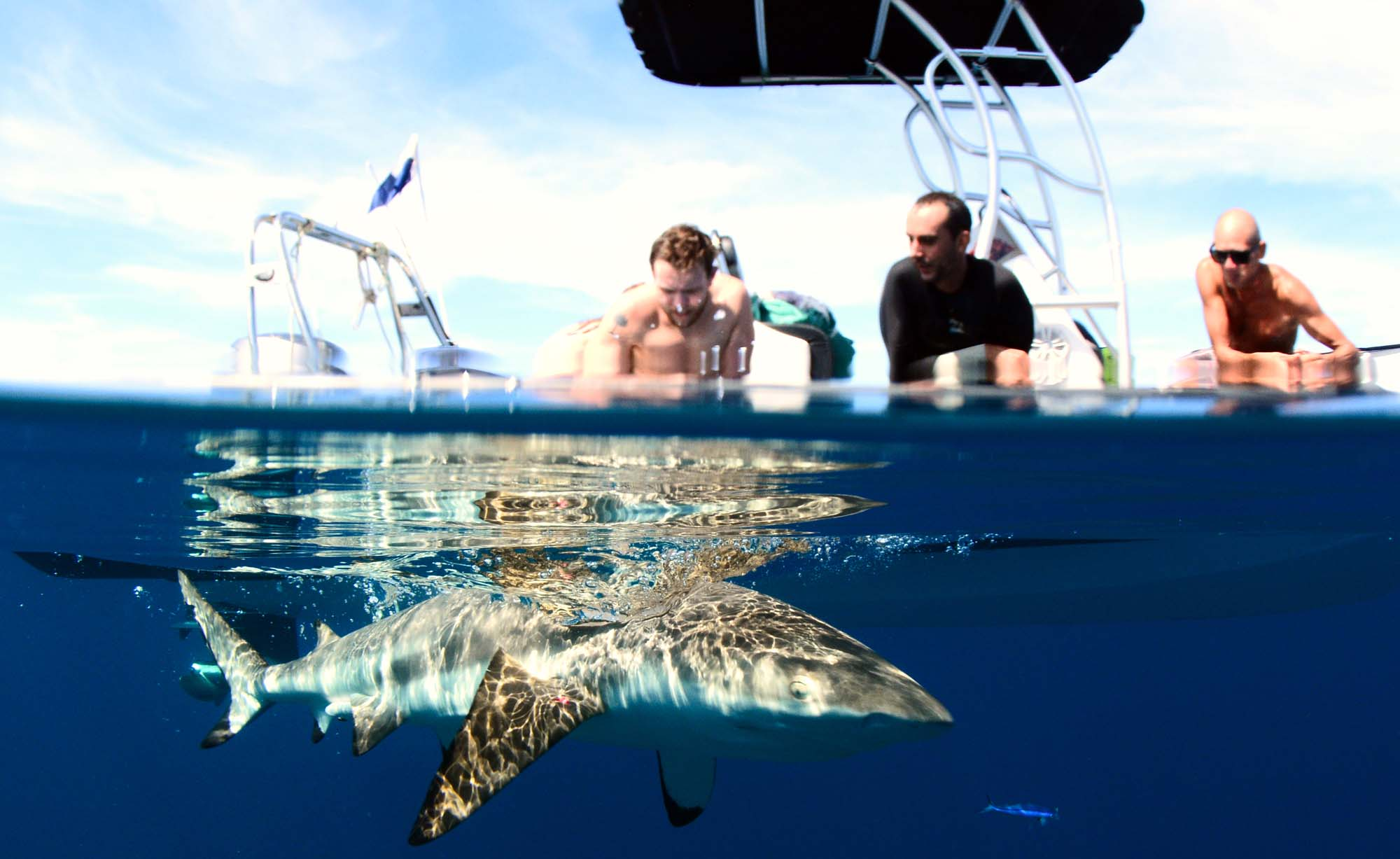 Swim with sharks in Moorea Freediving private tours