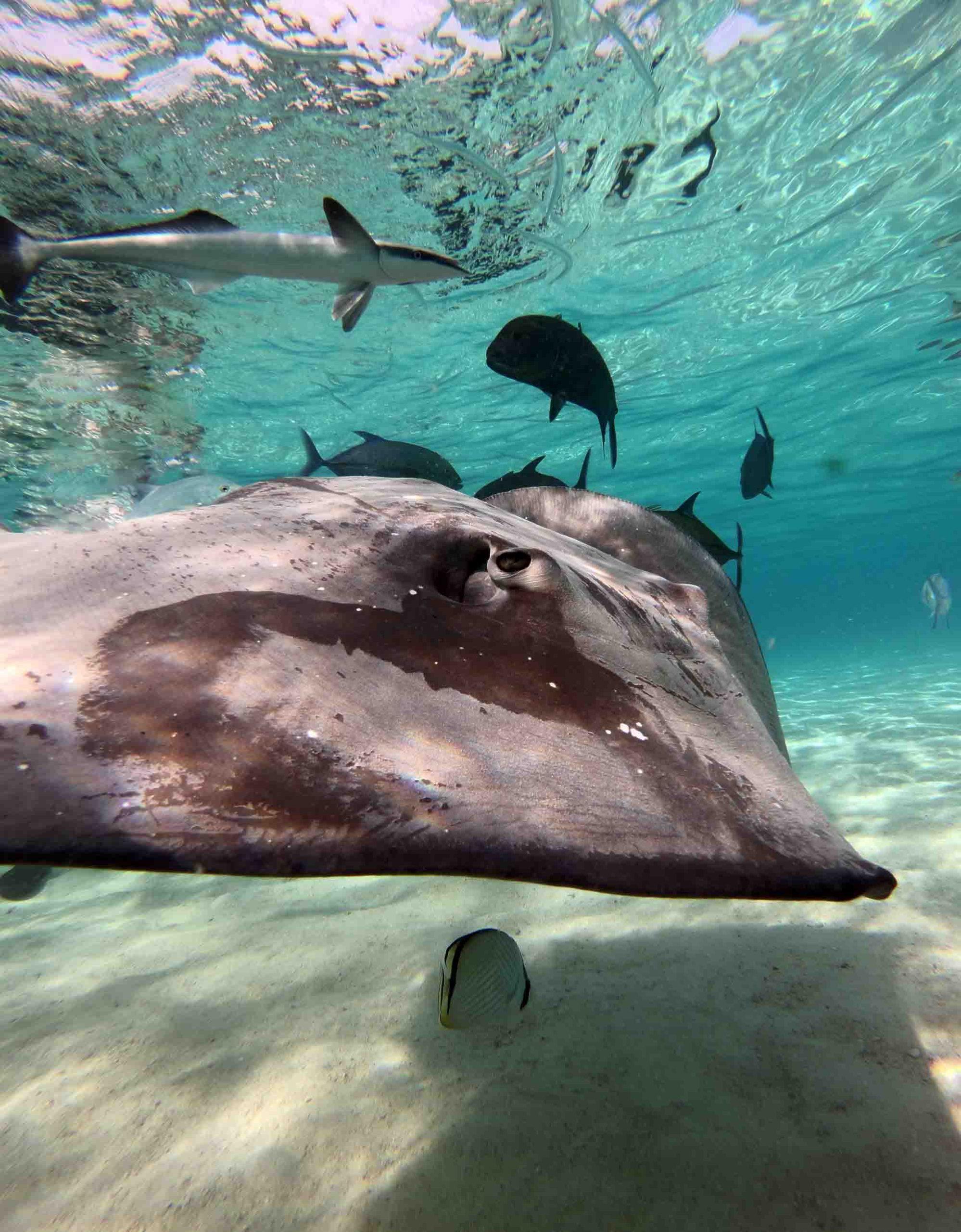 Best private Boat tours Moorea Snorkeling Marine Widlife Whales Sharks Moorea Ocean Adventures