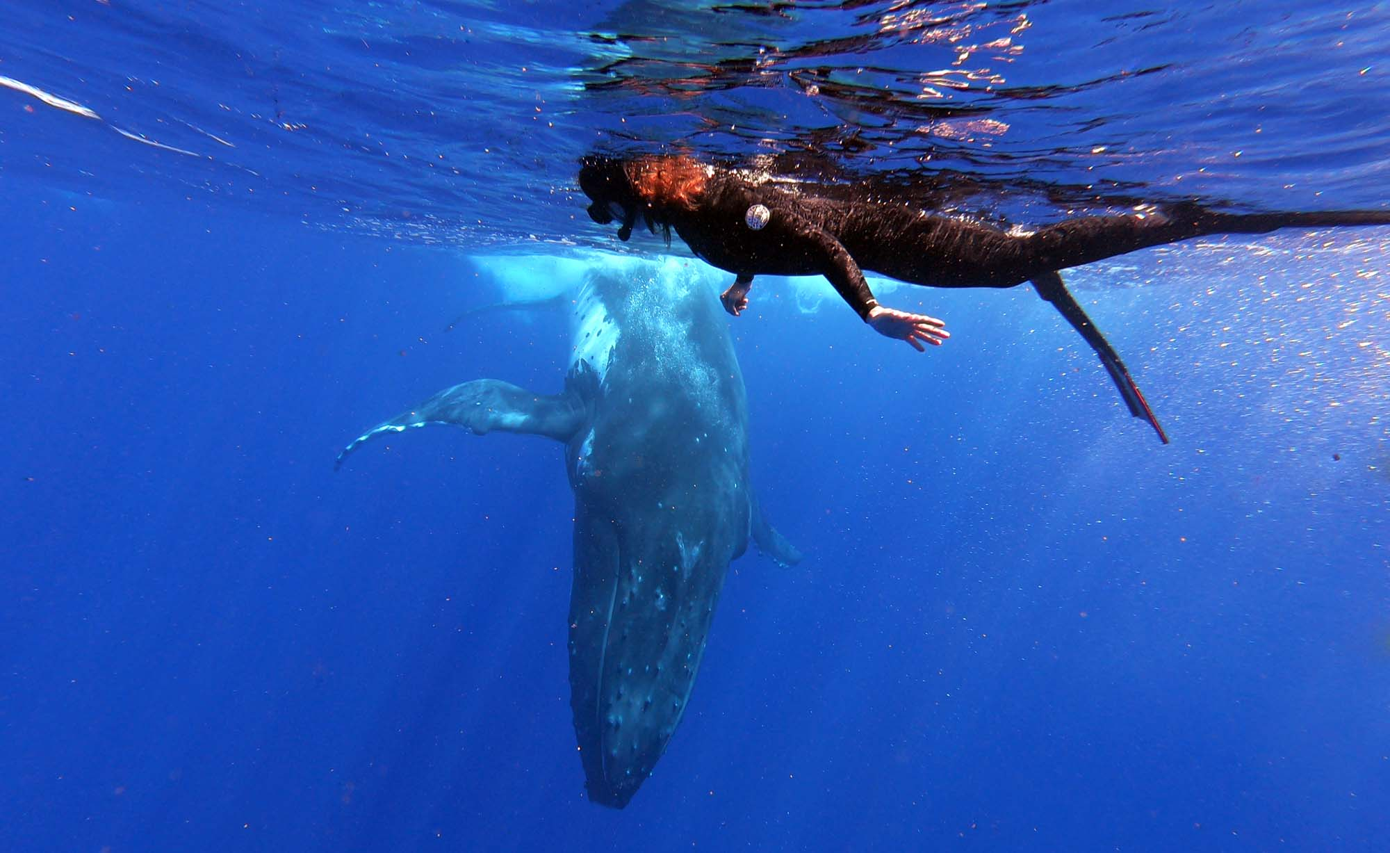 Swim with Humpback Whales Snorkeling Private Boat Tour Moorea Ocean Adventures
