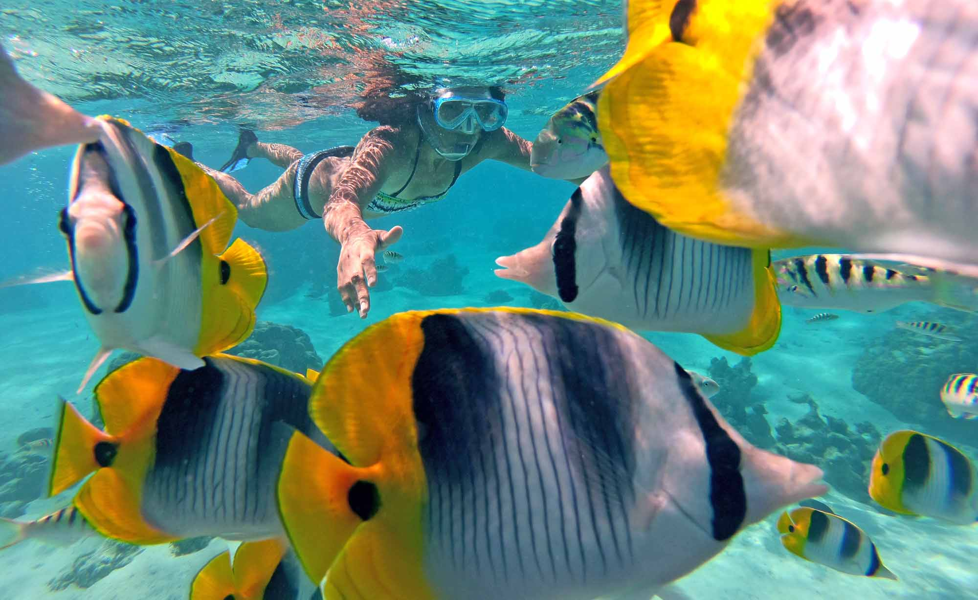 Reef Snorkeling Best Private Tour Moorea Tahiti