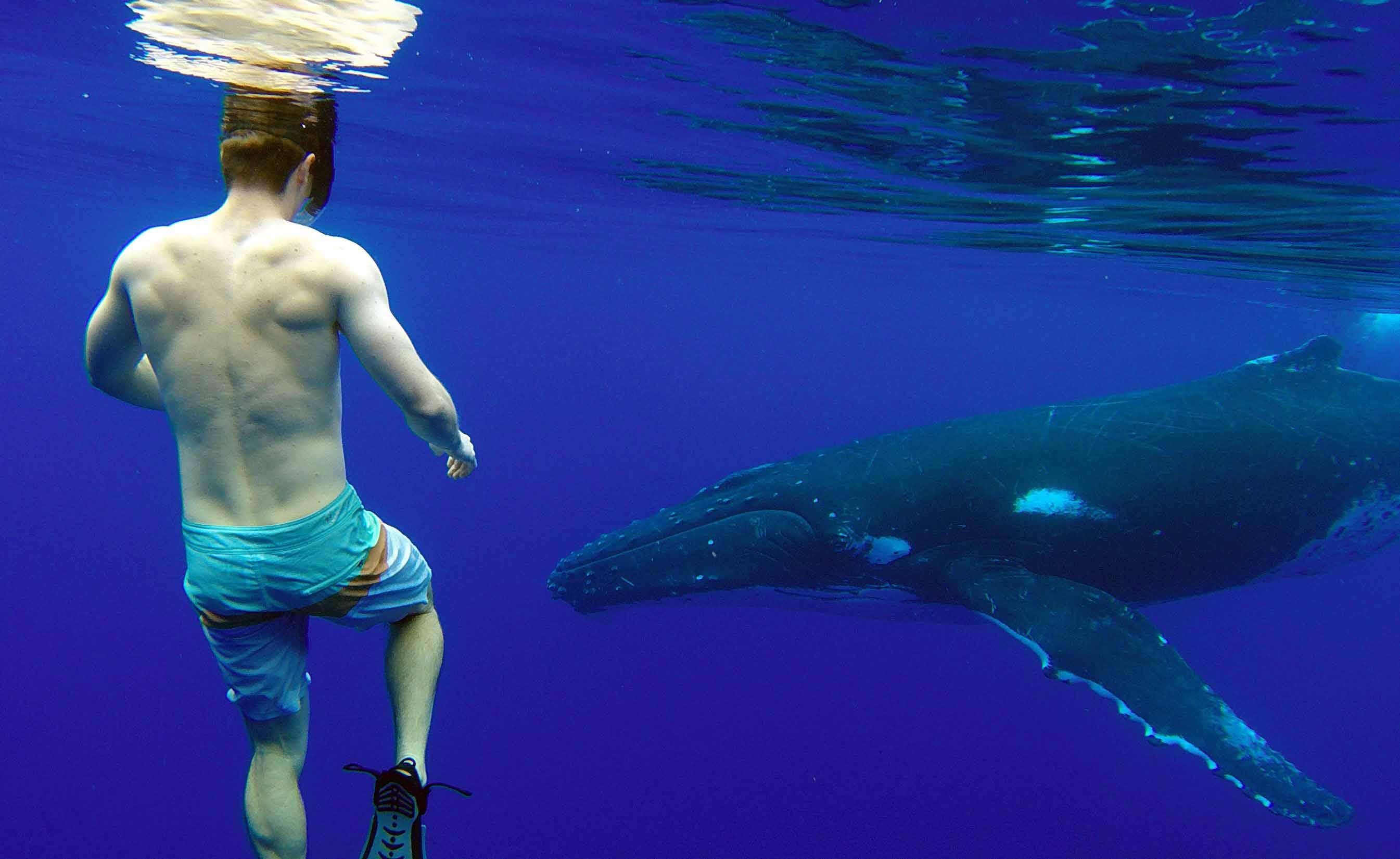 tour privé d'observation des baleines à bosse