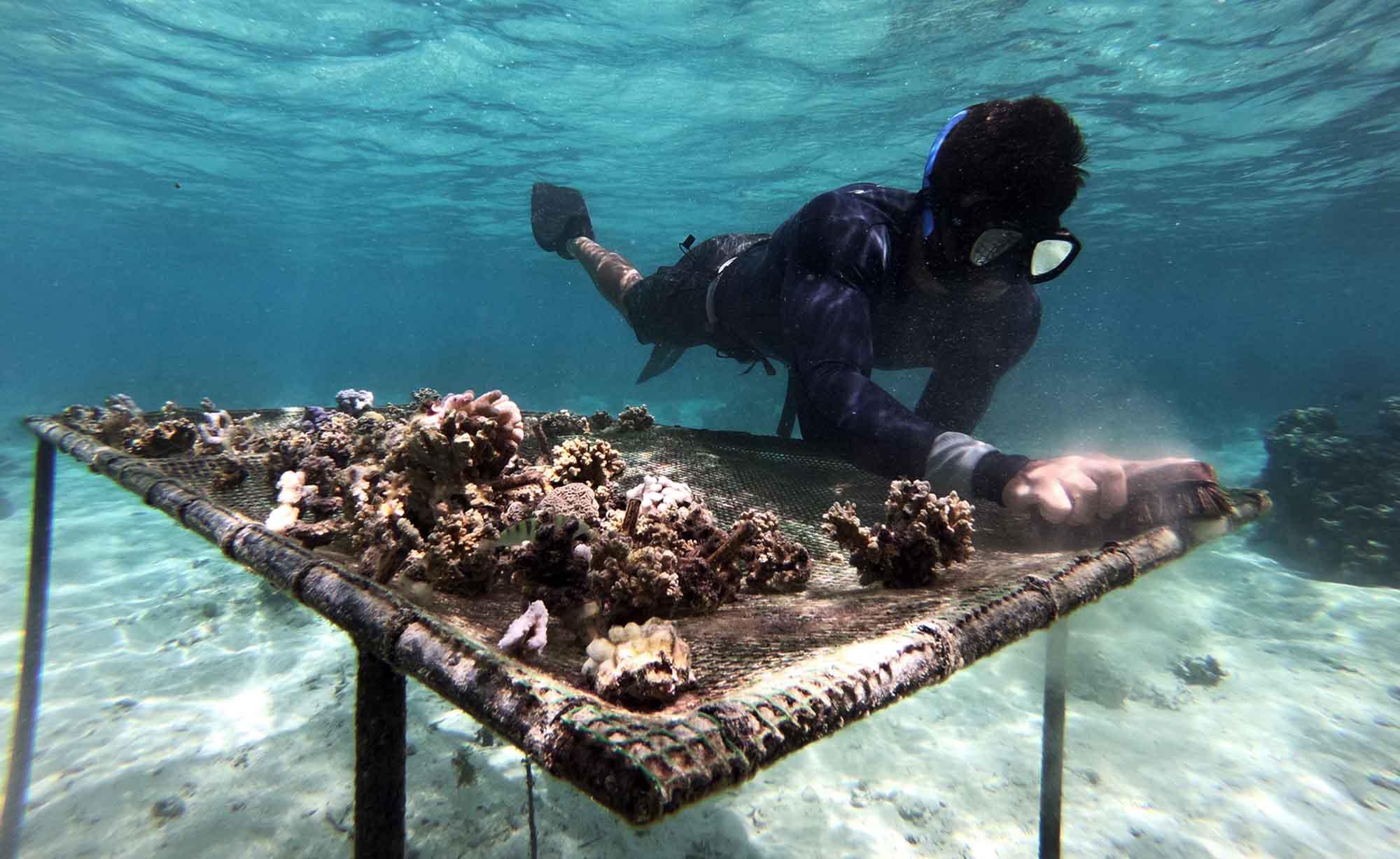 Ecotours Environment sustainable tourism Marine Wildlife Tours Moorea Ocean Adventures