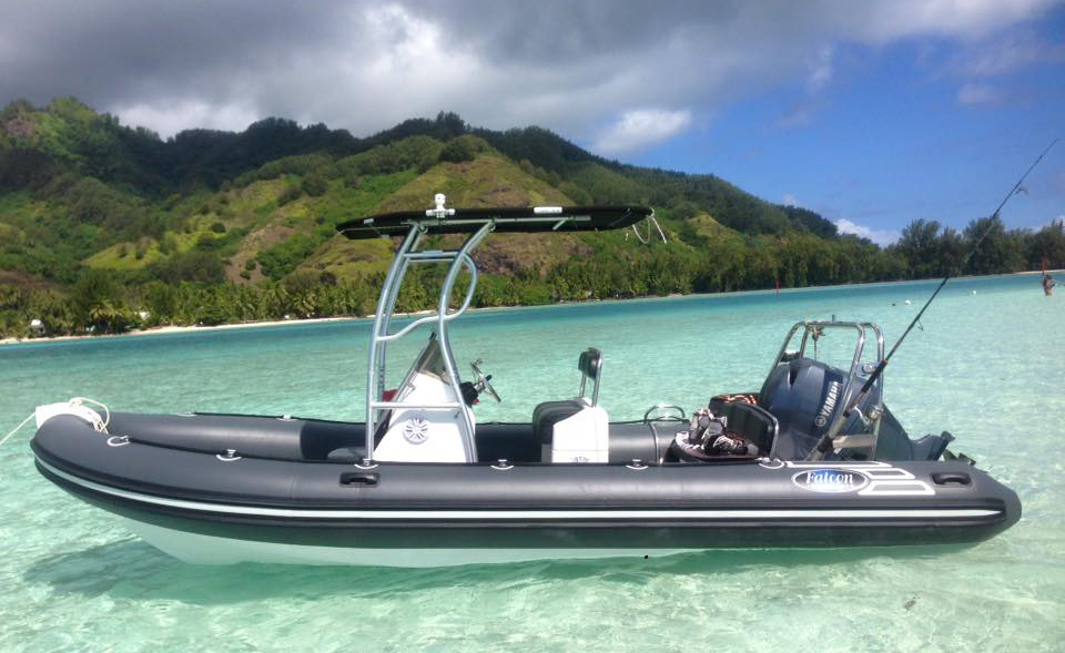 Private Boat Tours Snorkeling Marine life Moorea Ocean Adventures