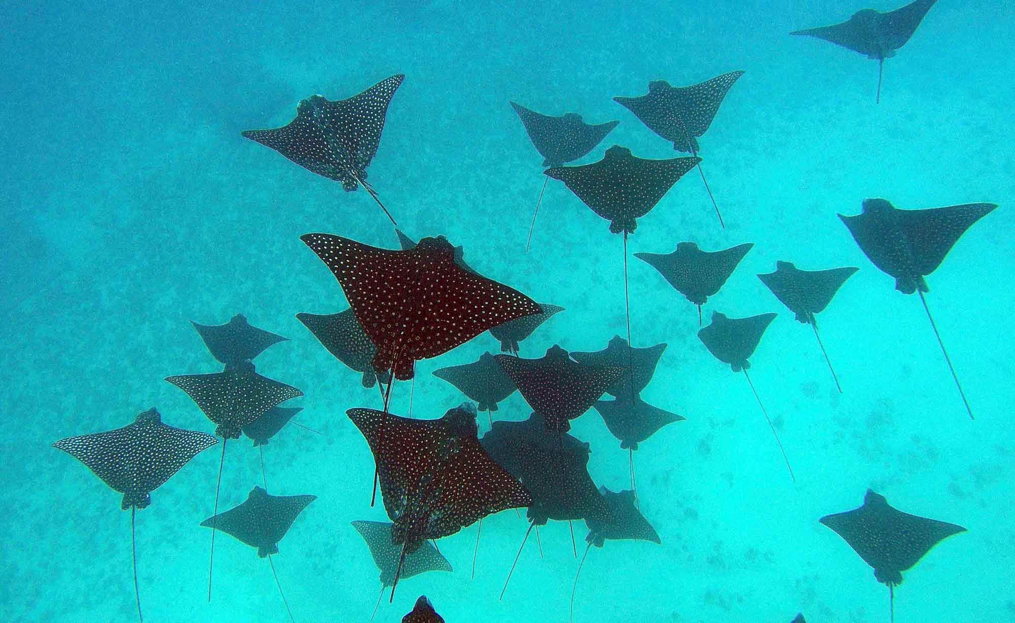 Marine species SNorkeling Diving Private Tours Wildlife Boat Moorea Ocean Adventures Sharks rays Birds Turtles Dolphins Whales