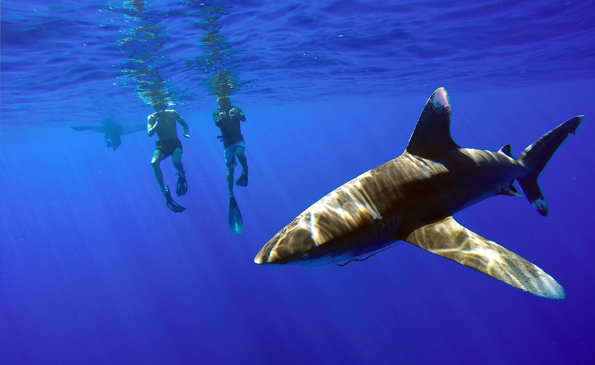 Open water snorkeling bird watching sharks dolphins pelagic private boat tours moorea ocean adventures