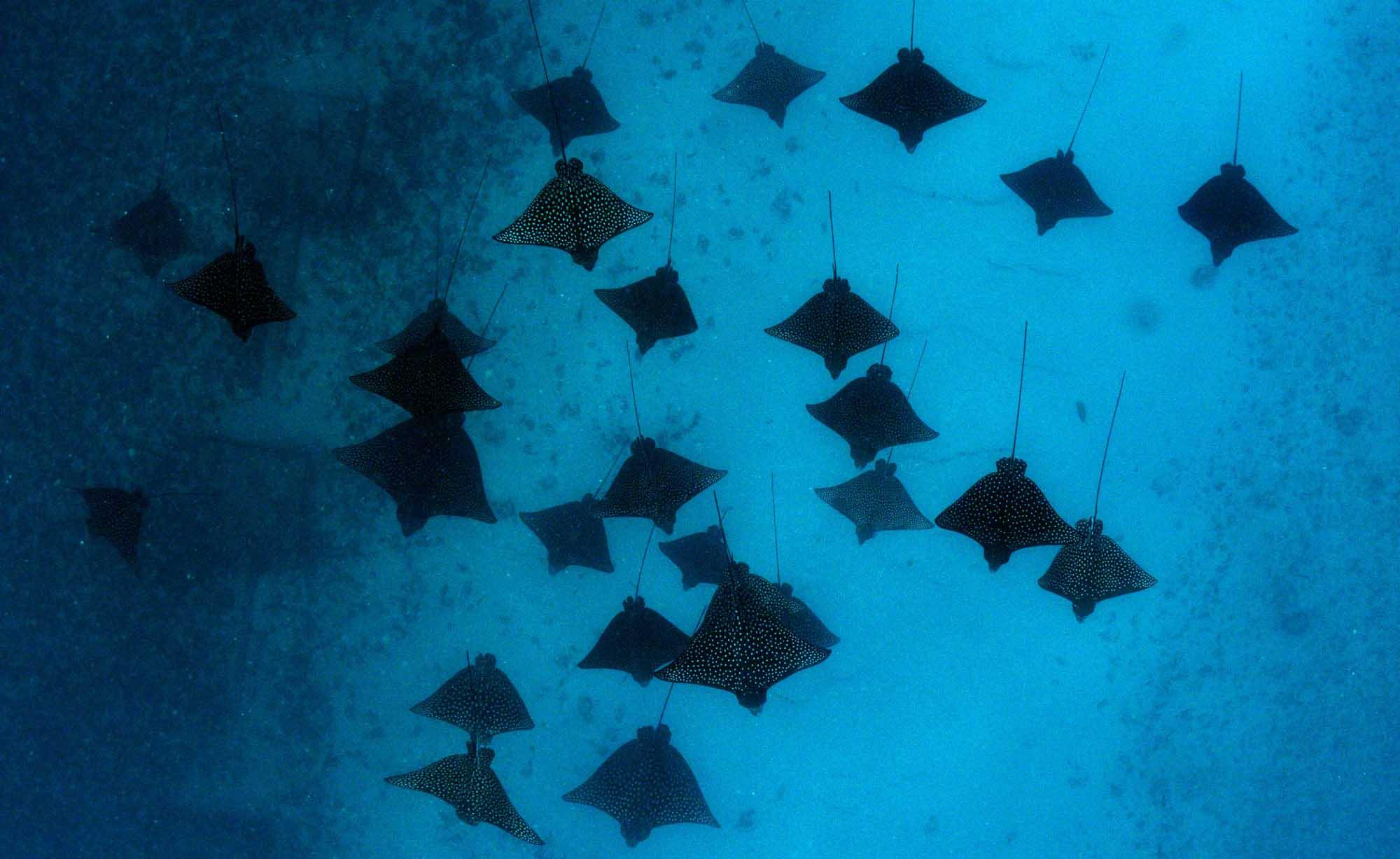 Underwater flying subwing freediving snorkeling Boat tours Moorea Ocean Adventures